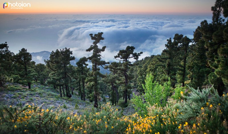 la-palma-canary-islands-spain-ion-photoion-above-clouds-3