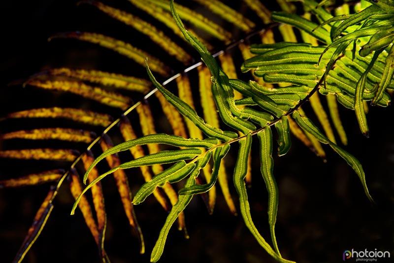 la-palma-canary-islands-spain-tatiana-zigar-photoion-el-paradiso-paradise-leaf
