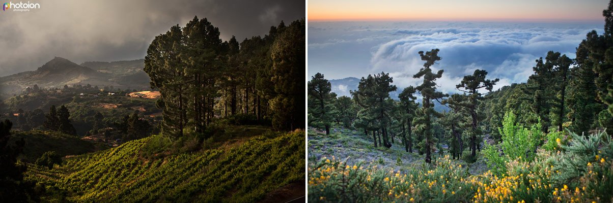 photography-holidays-la-palma-above-the-clouds-forest-2